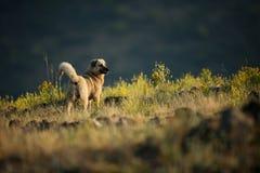 Kangal. The wild nature of Bulgaria. Free nature. A beautiful picture of nature. Rhodopes. Mountains in Bulgaria. European wildlif. E. Madzarovo. River Arda stock photo