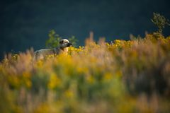 Kangal. The wild nature of Bulgaria. Free nature. A beautiful picture of nature. Rhodopes. Mountains in Bulgaria. European wildlif royalty free stock photography