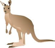 Kangaroo. Isolated against a white background. Australian common animal Royalty Free Stock Images