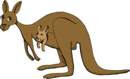 Kangaroo. Vector illustration of kangaroo with baby in pouch Stock Image