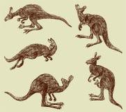 Kangaroo. Vector image of a hand drawn kangaroo Royalty Free Stock Images