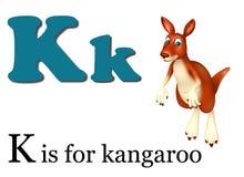 Kangaroo with alphabet Stock Image