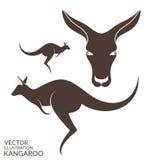Kangaroo.  animals on white background Royalty Free Stock Photos