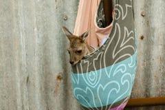 Kangaroo Baby Royalty Free Stock Photography