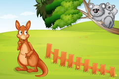 A kangaroo and bears Royalty Free Stock Photos