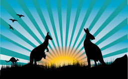 Kangaroo and blue rays Royalty Free Stock Photography