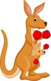 Kangaroo boxing Royalty Free Stock Image