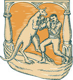 Kangaroo Boxing Man Etching Stock Photos