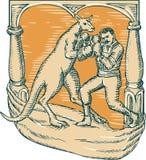 Kangaroo Boxing Man Etching vector illustration