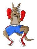 Kangaroo boxing Royalty Free Stock Photos