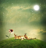 Kangaroo couple relaxing on hilltop Royalty Free Stock Images