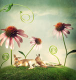 Kangaroo couples napping under flowers Royalty Free Stock Photo