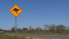 A kangaroo cross road sign car passing by stock video