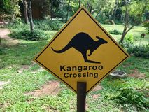Kangaroo crossing sign. Kangaroo crossing yellow sign with the animal in background Royalty Free Stock Photography