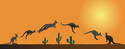 Kangaroo in different stages at sunset Royalty Free Stock Photography