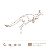 Kangaroo, drawing of animals, vectore Royalty Free Stock Images