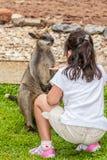 Kangaroo eats from the hand of the girl Stock Photos