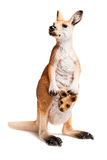 Kangaroo. Figurine on White background Royalty Free Stock Image