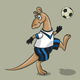 Kangaroo - the football player. The cheerful kangaroo in clothes of the football player plays with ball Stock Images