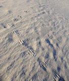 Kangaroo footprints, Wineglass Bay. Kangaroo footprints in the sand, Australia's Wineglass Bay, Tasmania Royalty Free Stock Photography