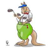 Kangaroo and golf. The big kangaroo with a tie and a kepi chooses stick golf which are at it in a bag and to be going to make blow to a ball Stock Images