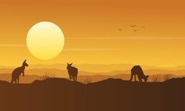 Kangaroo on the hill beauty scenery silhouette Royalty Free Stock Photos
