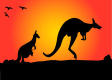 Kangaroo hopping Stock Photography