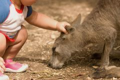 Kangaroo and human child relationship Stock Image