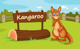A kangaroo Royalty Free Stock Photos