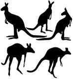 Kangaroo set. The image of a kangaroo in various positions. This marsupial animal is one of the symbols of Australia Royalty Free Stock Photography