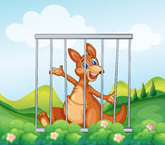 A kangaroo inside a cage Royalty Free Stock Images