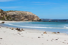 Free Kangaroo Island Stock Images - 25619124
