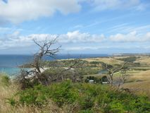 Kangaroo island Royalty Free Stock Photos