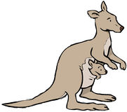 Kangaroo and joey. Kangaroowith baby joey in pouch Royalty Free Stock Photo