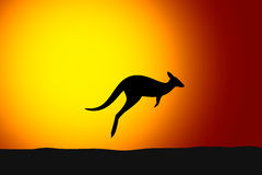 Kangaroo jumping front the sun, sunset, silhouette Stock Images