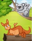A kangaroo and koalas Stock Images