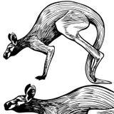 Kangaroo Line Art - black and white stock photos