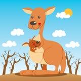 Kangaroo Mom. Baby kangaroo happy inside his mom marsupium pouch Stock Photo