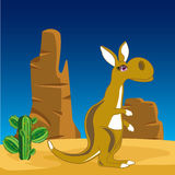 Kangaroo on nature Stock Photos