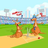 Kangaroo playing cricket Stock Photo