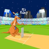 Kangaroo playing cricket Stock Image