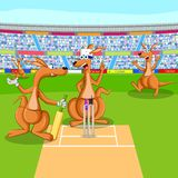 Kangaroo playing cricket Stock Images