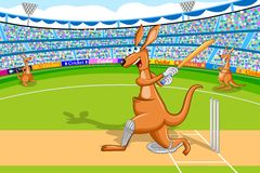 Kangaroo playing cricket Stock Photography