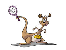 Kangaroo playing tennis Royalty Free Stock Images