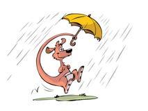 Kangaroo in the rain Stock Photos