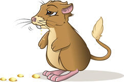 Kangaroo rat eating Stock Images