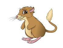 Kangaroo rat smiling Stock Images