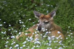 Kangaroo resting on grass Stock Image