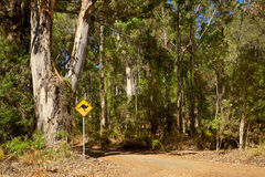 Kangaroo Sign. A roadside kangaroo warning sign next to a gravel road passing through indigenous forest near the town of Denmark in Western Australia Royalty Free Stock Photography