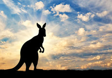 Kangaroo silhouette against a  sky Stock Image